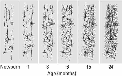 Increases in Broca area connections, paralleling growth in an infant's ability to generate speech