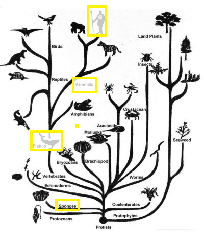 Figure 6.1 Tree of Life. Increasing neural complexity