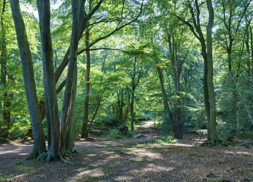 Forest edge with trunks, branches, and leaves vieing with each other ,