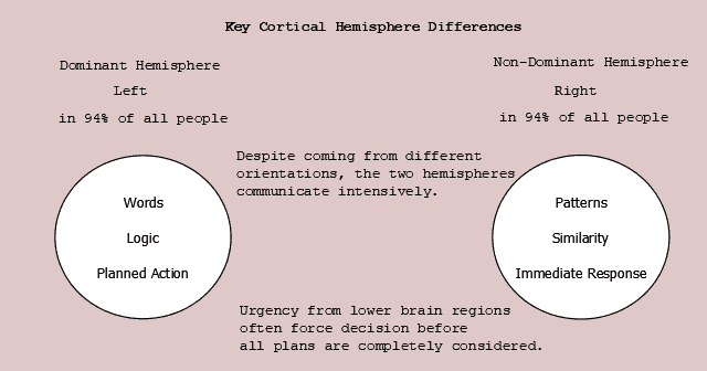 Figure 23.5 Key Hemisphere Differences. Dominant hemisphere generates words, uses logic and sequential thought. Non-dominant hemisphere assembles patterns, uses similarity in parallel operations.