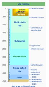 Life Timeline. Last sliver is humankind